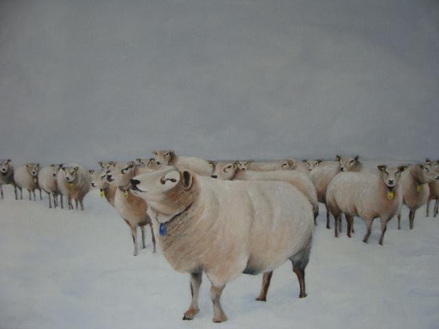 schapen in de sneeuw 001